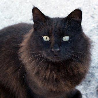 Stray, Street Cat, Cat, Cute, Mammal, Pet, Animal