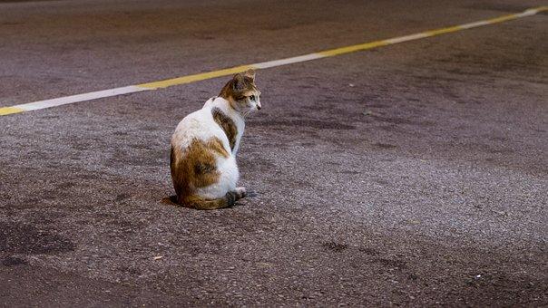 Road, Outdoor, Asphalt, Pavement, Animal, Street