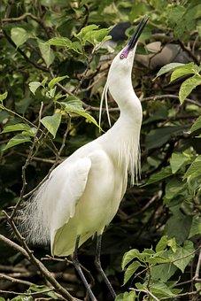 Bird, Nature, Wildlife, Animal, Feather, Outdoors, Beak