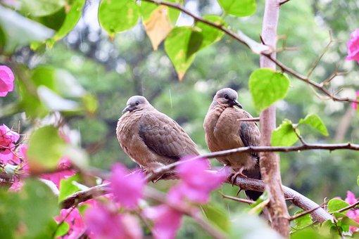 Nature, Tree, Outdoor, Bird, Close-up, Garden