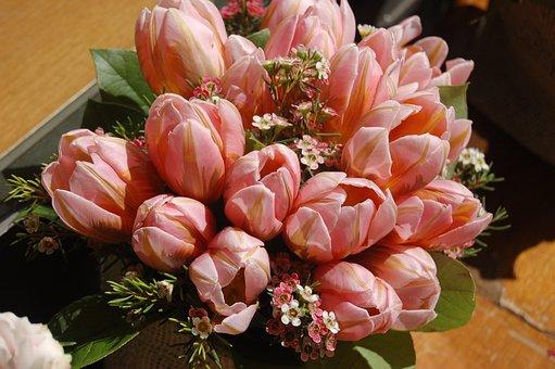 Flower, Nature, Leaf, Garden, Bloom, Wallpaper