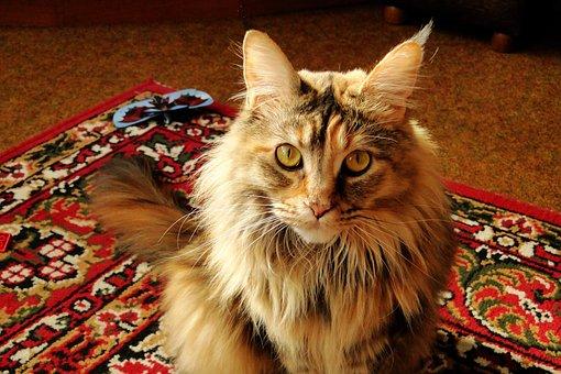 Charming, A Little, Animals, Mammals, Pets, Cat