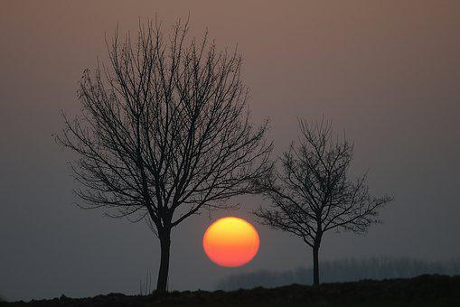 Sunset, Giant, Dawn, Nature, Sun, Tree, In Between