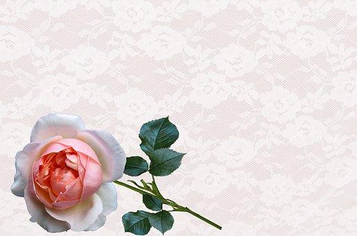 Greeting Card, Rose, Nature, Desktop, Flower