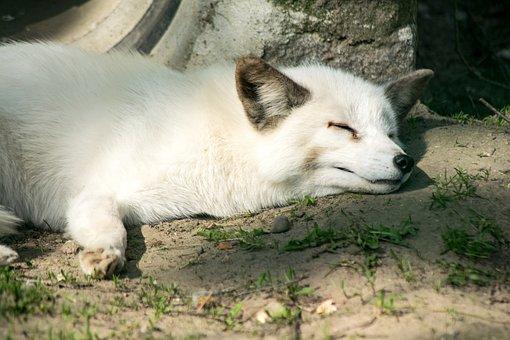 Mammal, Animal, Nature, Dog, Animal World, Cute
