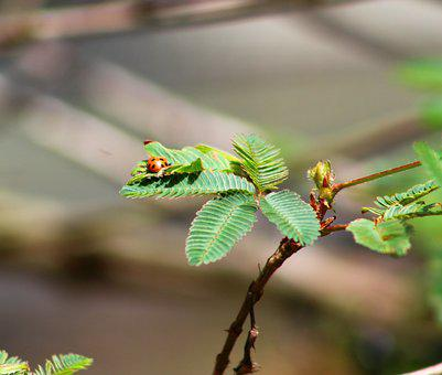 Insect, Wildlife, Nature, Leaf, Outdoors, Pest, Flora