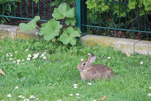 Grass, Nature, Flower, Summer, Meadow, Pasture, Hare