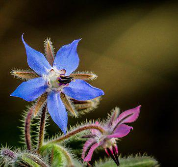 Nature, Flower, Plant, Outdoor, Wild, Close-up