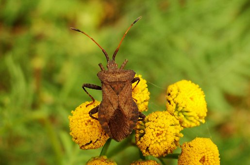 Nature, Plant, Flower, Insect, Leaf, Animals, Pluskwiak