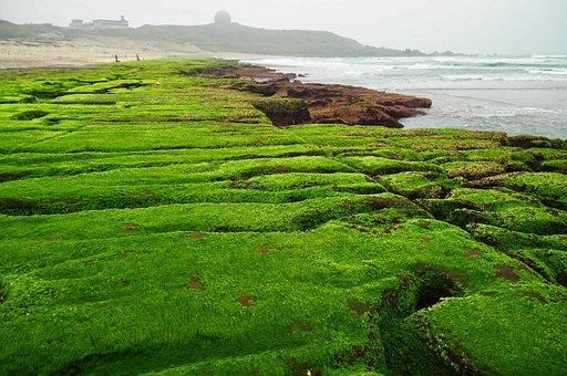 Landscape, Nature, Field, Lawn, Plant, Laomei