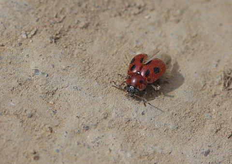 Baja, Red, Insecta, Wings, Nature