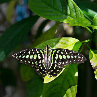Butterfly, Nature, Outdoors, Insect, Wildlife