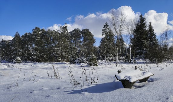 Snow, Winter, Cold, Frost, Frozen, Forest, Sky, Clouds