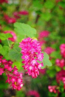 Nature, Flower, Flora, Garden, Summer, Leaf, Outdoors