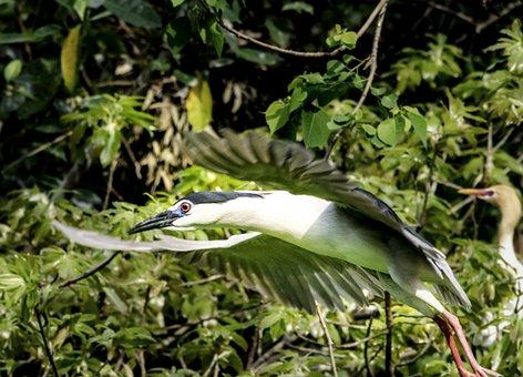 Bird, Nature, Wildlife, Beak, Feather, Wing, Animal