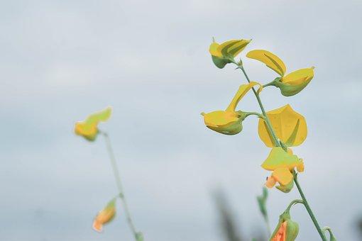 Flowers, Yellow, Shrubs Flowers, Yellow Flowers, Nature