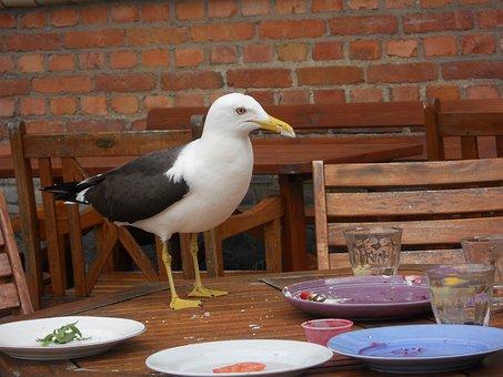 Seagull, Animal, Live, Nature