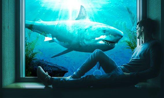 Water, Underwater, Ocean, Shark, Jaws, Fish, Aquarium