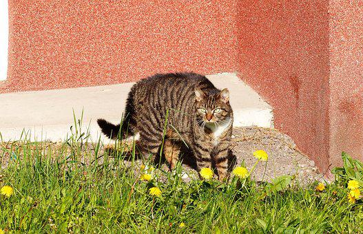 Nature, Lawn, Animals, Cat, At The Court Of, Mammals