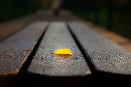 Leaf, Nature, Autumn, Color, Yellow, Bench, Outdoor