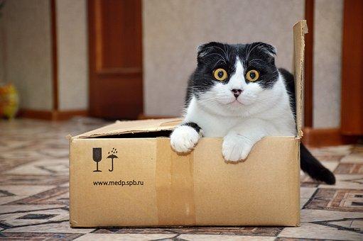 Box, Cute