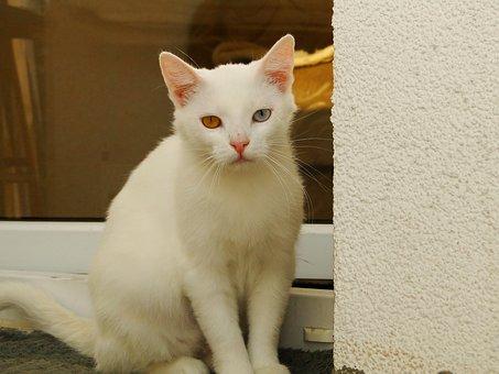Cat, Animals, Pets, Charming, Portrait, Mammals, Kitten