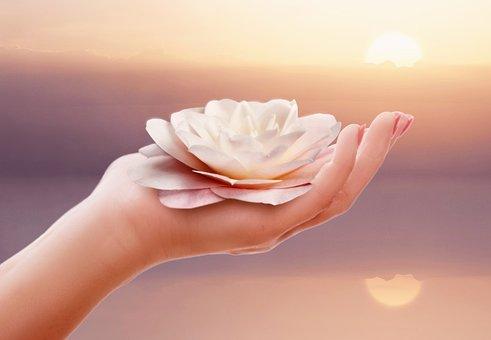 Hand, Nature, Ease, Wellness, Camellia, Camellia Flower