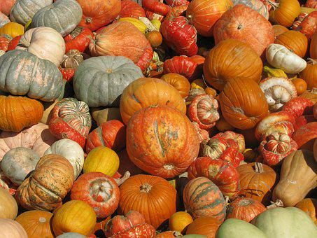 Pumpkin, Fall, Thanksgiving, Market, Food, Vegetable