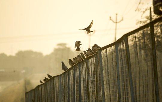 Fence, Birds, Sunrise, Wildlife, Outdoor, Flying