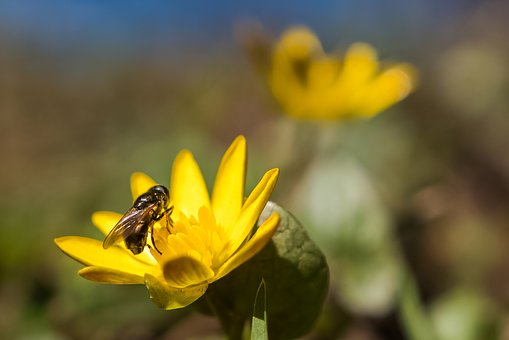 Nature, Insect, Flora, Outdoors, Flower, Honey, Bee