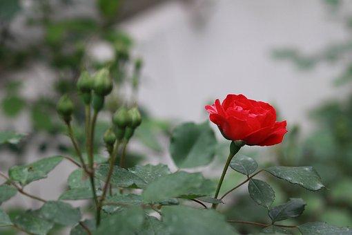 Flowers, Nature, Plants, Summer, Garden, Forest