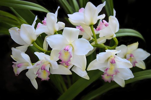 Orchid, Flower, Exotic, Tropical, Nature, Garden