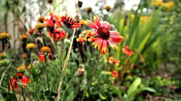 Flower, Nature, Plant, Summer, Garden, Leaf