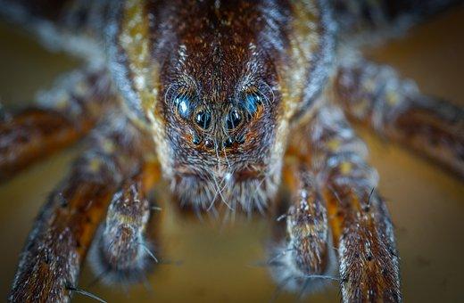 Nature, Animals, Living Nature, Spider, Arachnids
