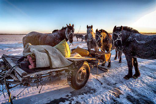Mammal, Winter, Horses, Wildlife Photography, Brown