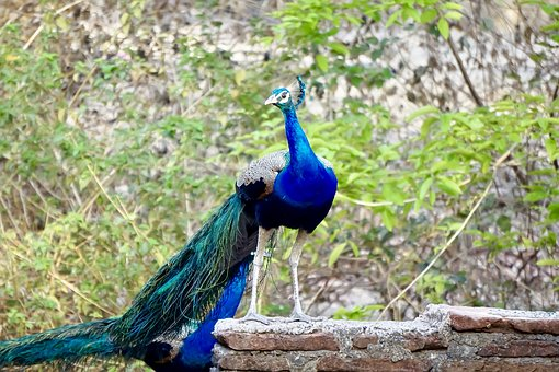 Capture, By, Me, Bharat, Kansara, Banswara, Rajasthan