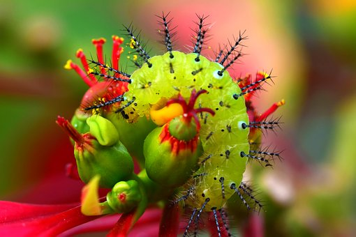Nature, Insect, Flower, Plant, Outdoor, Wild, Beautiful