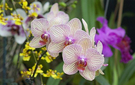 Flower, Nature, Flora, Tropical, Garden, Petal