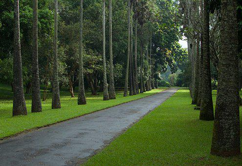 Palm Tree, Road, Nature, Landscape