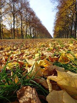 Leaf, Nature, Fall, Outdoors, Season, Park, Wood, Tree