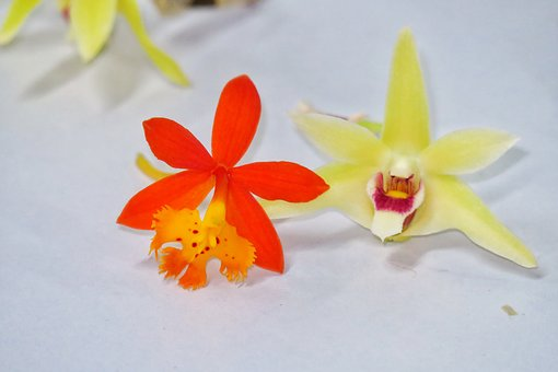 Flower, Tropical, Plant, Petal, Foreign, Bloom