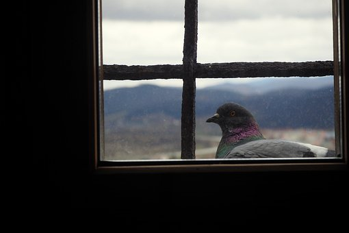 Pigeon, Pingeon, Tower, Mystic, Slovakia, Castle