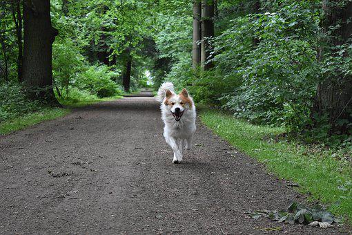 Dog, Run, Nature, Forest, Come