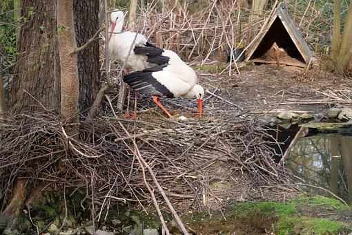 Nature, Wood, Bird, Tree, Animal World, Nest, Stork