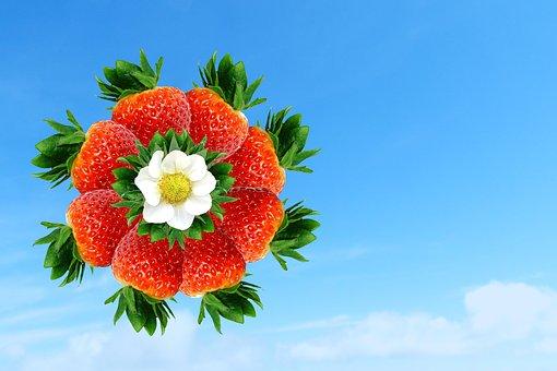Strawberry, Strawberries, Pinwheel, Plant, Sky, Blue