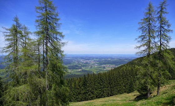 Nature, Wood, Tree, Landscape, Sky, Mountain, Tegernsee