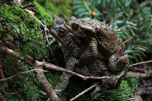 The Nature Of The, Frog, Our, Environment