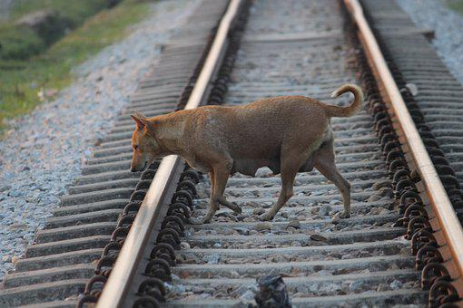 Track, Road, Travel, Railroad Track, Railway, Dog