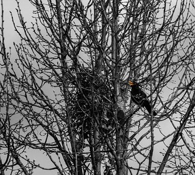 Tree, Branch, Winter, Wood, Nature, Season, Snow, Bird
