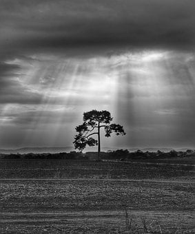 Tree, Landscape, Sun Rays, Storm, Clouds, Rainy, Field